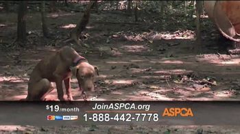 ASPCA TV Spot, 'Save Lives This Summer' - Thumbnail 6