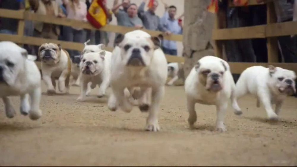 GEICO TV Commercial, 'Running of the Bulldogs' - Video