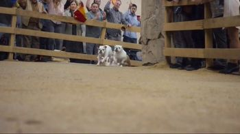 GEICO TV Spot, 'Running of the Bulldogs' - Thumbnail 4