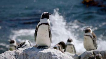 San Diego Zoo Global Wildlife Conservancy TV Spot, 'Save Penguins' - Thumbnail 2