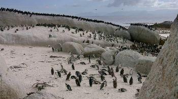San Diego Zoo Global Wildlife Conservancy TV Spot, 'Save Penguins' - Thumbnail 4