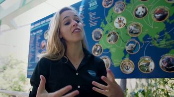 San Diego Zoo Global Wildlife Conservancy TV Spot, 'Save Penguins' - Thumbnail 6