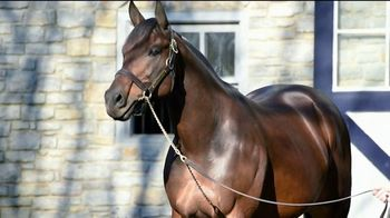 Coolmore America TV Spot, 'Uncle Mo: The Momentum Continues' - Thumbnail 2