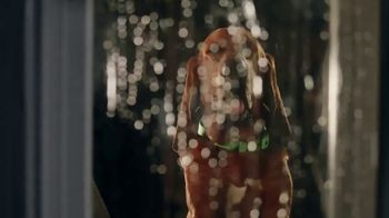Rover.com TV Spot, 'When There's Thunder, We've Got Cuddles' - Thumbnail 2