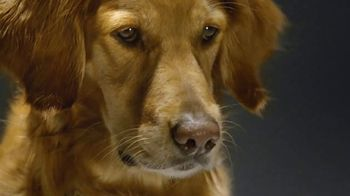 Comcast Business TV Spot, 'Dog Bones' - Thumbnail 1