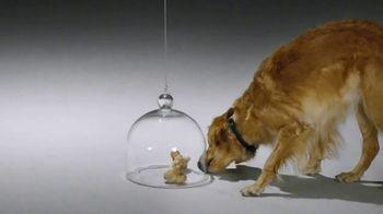 Comcast Business TV Spot, 'Dog Bones' - Thumbnail 5