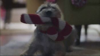 TJX Companies TV Spot, 'Squeaky Toy Jingle Bells' - Thumbnail 5