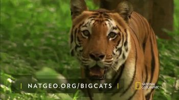 National Geographic TV Spot, \'Save Big Cats: Tiger\' Feat. Filipe DeAndrade