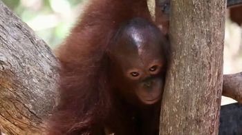 International Animal Rescue TV Spot, 'Joyce the Orangutan' - Thumbnail 2