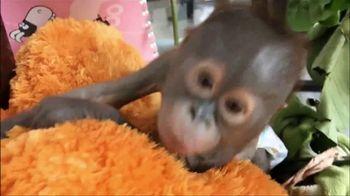 International Animal Rescue TV Spot, 'Joyce the Orangutan' - Thumbnail 4