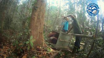 International Animal Rescue TV Spot, 'Joyce the Orangutan' - Thumbnail 5