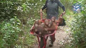 International Animal Rescue TV Spot, 'Joyce the Orangutan' - Thumbnail 6