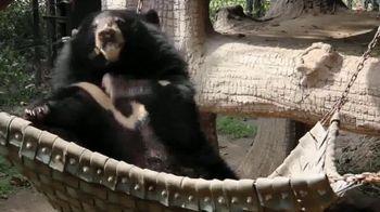 International Animal Rescue TV Spot, 'Bean the Sloth Bear' - Thumbnail 1