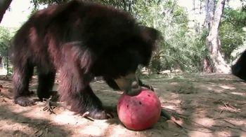 International Animal Rescue TV Spot, 'Bean the Sloth Bear' - Thumbnail 2