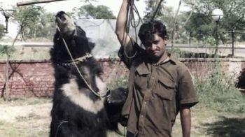 International Animal Rescue TV Spot, 'Bean the Sloth Bear' - Thumbnail 3