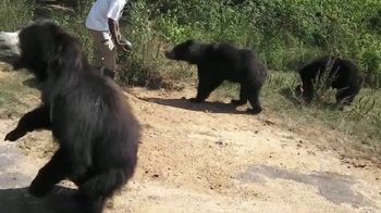 International Animal Rescue TV Spot, 'Bean the Sloth Bear' - Thumbnail 5