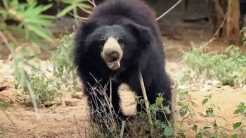International Animal Rescue TV Spot, 'Bean the Sloth Bear' - Thumbnail 6