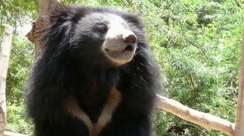 International Animal Rescue TV Spot, 'Bean the Sloth Bear' - Thumbnail 7