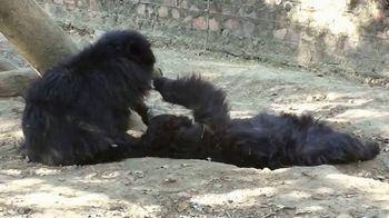 International Animal Rescue TV Spot, 'Bean the Sloth Bear' - Thumbnail 8