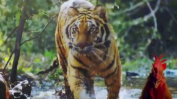 Animal Planet Project Cat TV Spot, 'Discovery: Protect Endangered Tigers' - 32 commercial airings