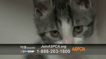 ASPCA TV Spot, 'Season of Giving' - Thumbnail 8
