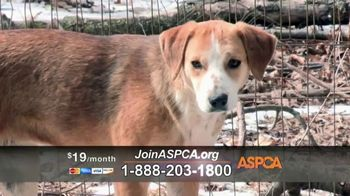 ASPCA TV Spot, 'Season of Giving' - Thumbnail 3