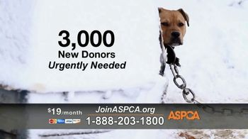 ASPCA TV Spot, 'Season of Giving' - Thumbnail 4