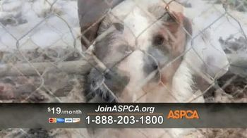 ASPCA TV Spot, 'Season of Giving' - Thumbnail 5