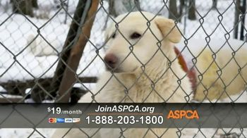 ASPCA TV Spot, 'Season of Giving' - Thumbnail 6
