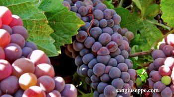San Giuseppe Pinot Noir TV Spot, 'Did You Know?' - Thumbnail 6