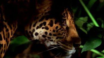 National Geographic TV Spot, 'Save Big Cats: Jaguar' - Thumbnail 3