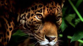 National Geographic TV Spot, 'Save Big Cats: Jaguar' - Thumbnail 4