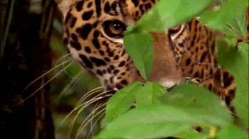 National Geographic TV Spot, 'Save Big Cats: Jaguar' - Thumbnail 5
