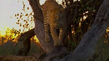 National Geographic TV Spot, 'Save Big Cats: Leopard' - Thumbnail 3