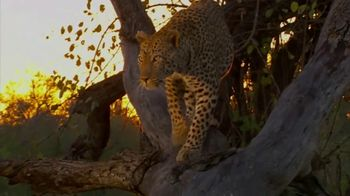 National Geographic TV Spot, 'Save Big Cats: Leopard' - Thumbnail 4