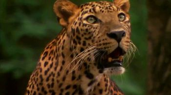 National Geographic TV Spot, 'Save Big Cats: Leopard' - Thumbnail 7