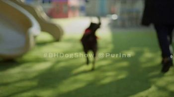 Purina TV Spot, 'Every Dog Is a Star' Featuring Maria Menounos - Thumbnail 8