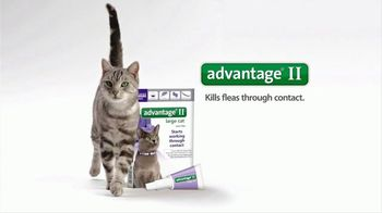 Bayer Advantage II TV Spot, 'Stare Down' - Thumbnail 6