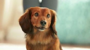 Purina Bella TV Spot, 'Dog Food Specially Made for Small Dogs' - Thumbnail 1