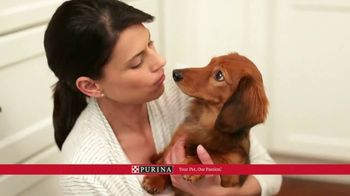 Purina Bella TV Spot, 'Dog Food Specially Made for Small Dogs' - Thumbnail 10