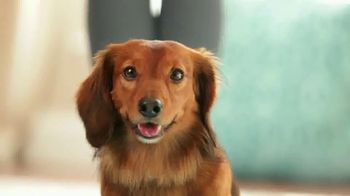 Purina Bella TV Spot, 'Dog Food Specially Made for Small Dogs' - Thumbnail 2