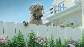 K9 Advantix II TV Spot, 'Neighbor Dogs' - Thumbnail 2