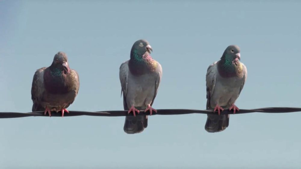 GEICO TV Commercial, 'Pigeons Fire at Will' - iSpot.tv