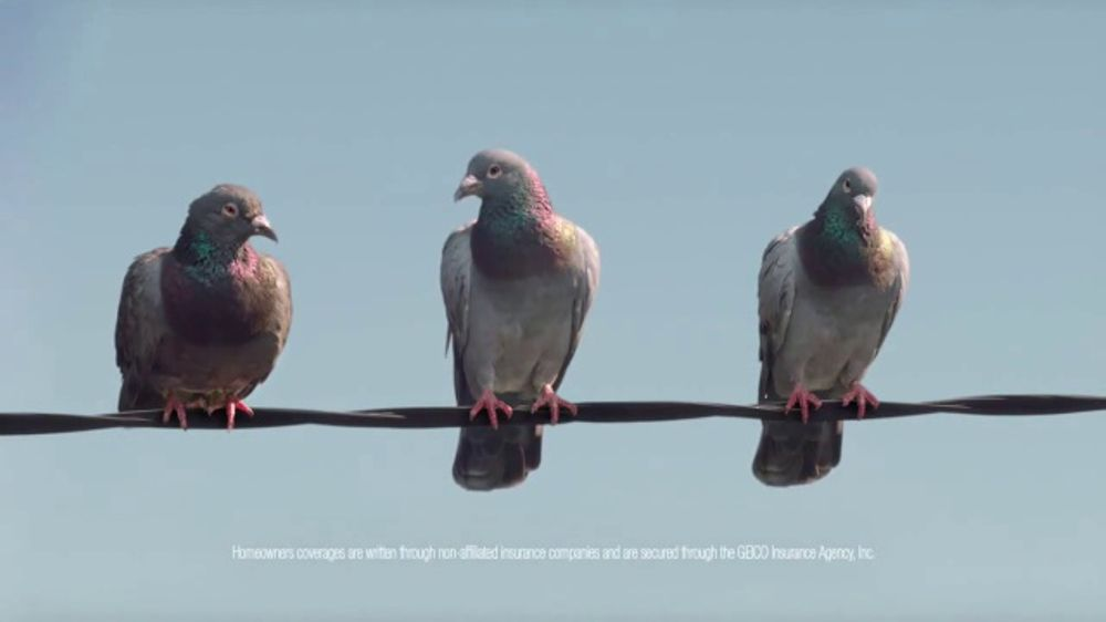Esurance Car Insurance >> GEICO TV Commercial, 'Pigeons Fire at Will' - iSpot.tv