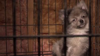 ASPCA TV Spot, 'Start Saving Animals'