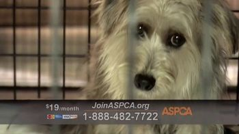 ASPCA TV Spot, 'Start Saving Animals' - Thumbnail 4