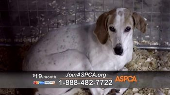 ASPCA TV Spot, 'Start Saving Animals' - Thumbnail 6