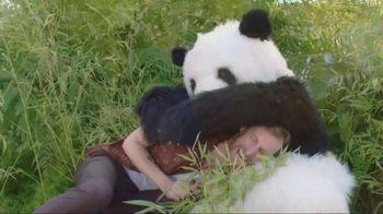 GoDaddy GoCentral TV Spot, 'Panda Breaks the Internet' - 767 commercial airings