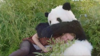 GoDaddy GoCentral TV Spot, \'Panda Breaks the Internet\'