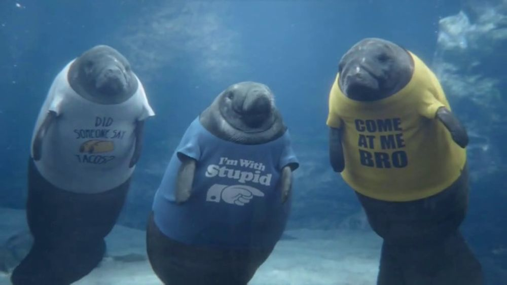 GEICO TV Commercial, 'Manatee Shirts' - iSpot.tv